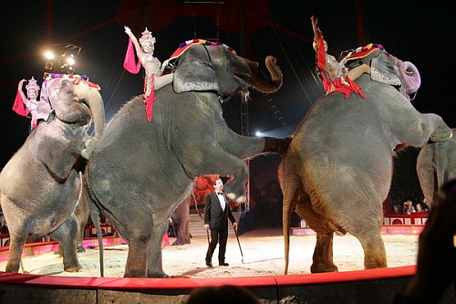 Photo of Olpe: Circus Krone (Fotostrecke)