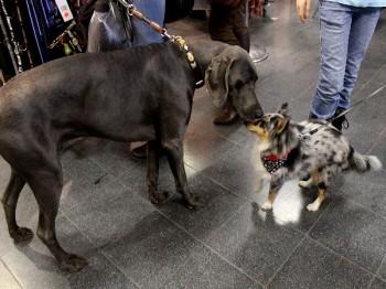 Hund und Heimtiermesse Siegen 2013 (16)