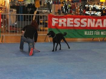 Hund und Heimtiermesse Siegen 2013 (31)