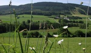 Märkische Waldtage vom 05. Juli – 07. Juli 2013