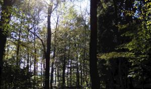 Ranger zeigt Kids die Geheimnisse des Waldes
