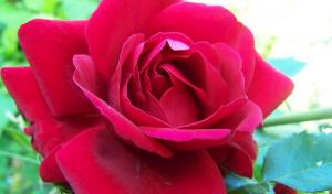 Love-Scamming – Betrug mit vorgetäuschter Liebe