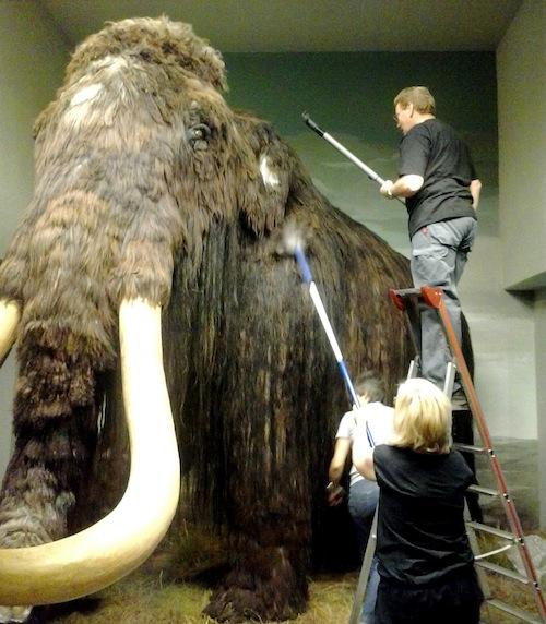 """Dem lebensgroßen Mammut """"Willy"""" wurde kürzlich mit Staubsaugern auf den Pelz gerückt (Quelle: Gemeinde Wilnsdorf)."""
