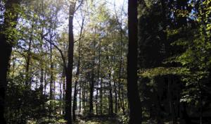 Möhnesee: Ausflüge in die Natur