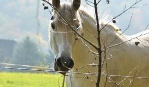Die Reiterplaketten für 2014 sind da