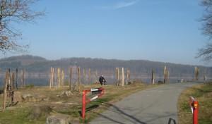 Ruhrverband setzt Waldumbau am Möhnesee fort