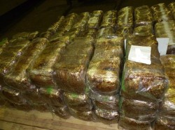 <b>Polizei stellt 3,5 Tonnen Marihuana sicher</b>