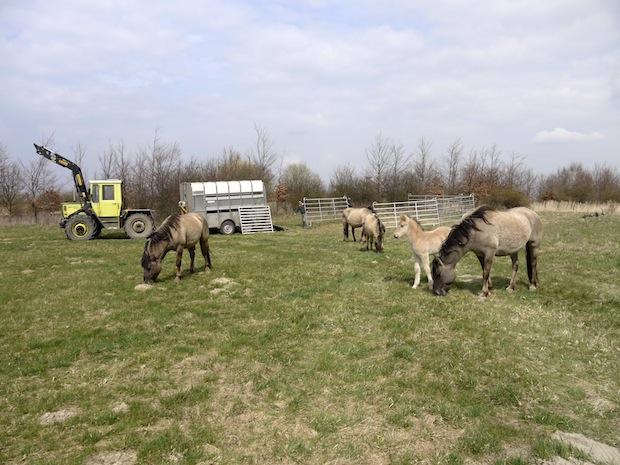 Photo of Natur, Geschichte, Wildpferde: Unterwegs auf dem Alten Soestweg