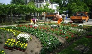 Über 7.000 Sommerblumen verschönern das Stadtbild