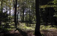 Unfall bei Forstarbeiten – Waldarbeiter schwer verletzt