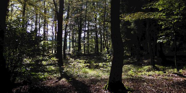 Photo of Unfall bei Forstarbeiten – Waldarbeiter schwer verletzt