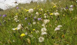 Blühende Vielfalt: Erlebnis Winterberger Bergwiesen