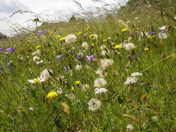 Photo of Blühende Vielfalt: Erlebnis Winterberger Bergwiesen