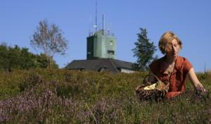 Sonne lockt die Heidelbeeren zur Reife: Bald ist Erntezeit!
