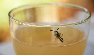 Vorsicht bei Insektenstichen