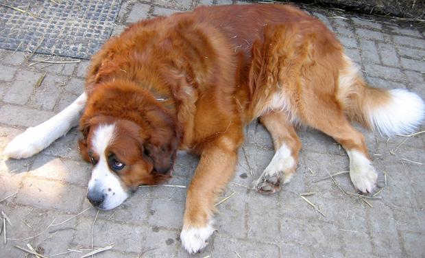 Photo of Hundebestandsaufnahme wird durchgeführt