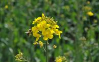 Bösartige Faulbrut der Bienen festgestellt