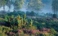 Als Landschafts-Coach Schönheit und Wirkung von Natur vermitteln