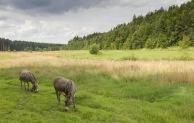 Einblicke in Wiesenlandschaften des Möhnetals