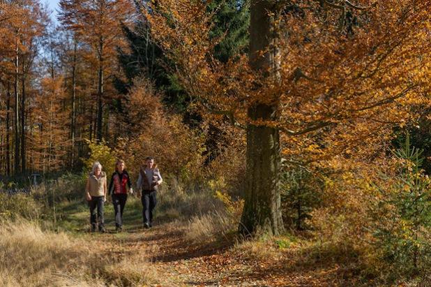 Wandern im Sauerland (Foto: Kur- & Freizeit GmbH, Schmallenberger Sauerland)