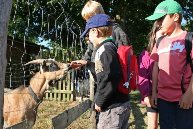 Die Sommerferienbetreuung im vergangenen Jahr lud u.a. zu einem Besuch auf dem Wilgersdorfer Birkenhof ein (Foto: Gemeinde Wilnsdorf).