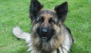 Stadt Olsberg bittet Hundehalter um Rücksichtnahme