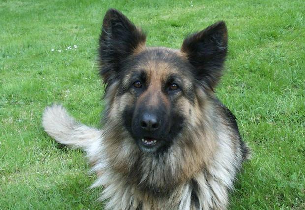 Photo of Stadt Olsberg bittet Hundehalter um Rücksichtnahme