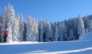 Topfit durch den Winter: AktivZeit motiviert mit Spaß zur Bewegung
