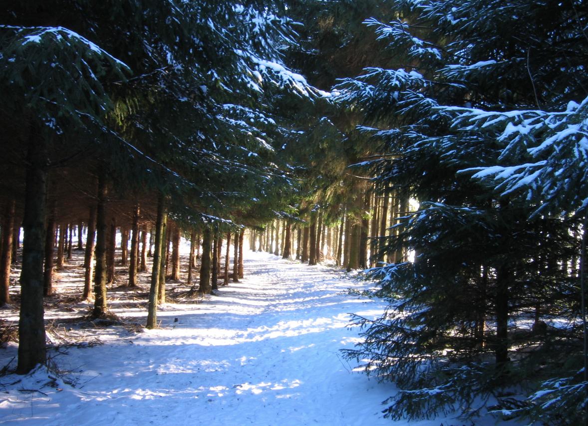 Photo of Weihnachtsbäume werden abgeholt