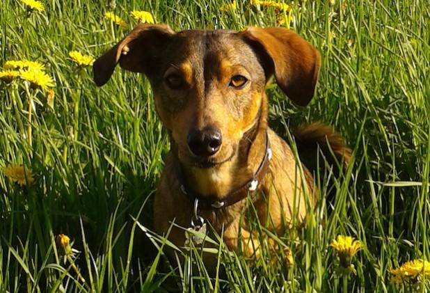 Die Hansestadt Attendorn führt in diesem Jahr eine Hundebestandsaufnahme durch. Die letzte Hundebestandsaufnahme liegt fünf Jahre zurück (Foto: Hansestadt Attendorn).