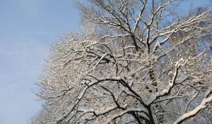 Baumfällarbeiten zwischen Attendorn und Windhausen