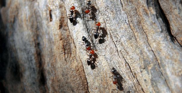 "Photo of ""Insektengeschichten"" in Siegen-Bürbach"