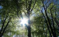 Große Ausstellernachfrage für DLG-Waldtage