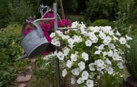"""Interessenten gesucht für """"Tag der offenen Gärten""""!"""