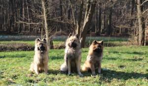 """""""11. Hund & Heimtier"""" – die Messe rund ums Tier"""
