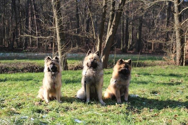 """Photo of """"11. Hund & Heimtier"""" – die Messe rund ums Tier"""