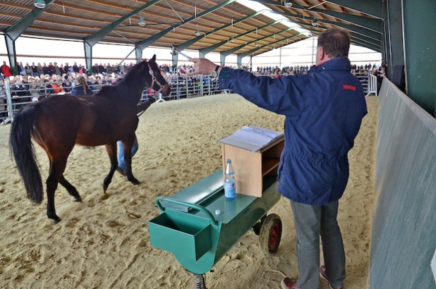 Der beauftragte Auktionator Volker Raulf (MennrathS – Auktionen für Pferde und Landwirtschaft, Mönchengladbach) zeigte sich überrascht über die erzielten Erlöse (Foto: Wilhelm Müschenborn/Kreis Soest).