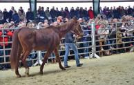 Tierschutzfall: Neue Besitzer für alle Pferde