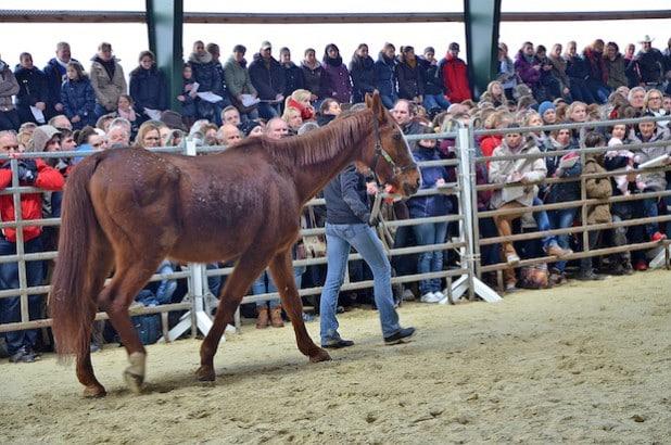 Eine große Anzahl von Besuchern führte dazu, dass alle Tiere neue Besitzer fanden (Foto: Wilhelm Müschenborn/Kreis Soest).