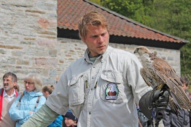 Falkner Pierre Schmidt kommt mit seinen Vögeln zur Luisenhütte (Foto: Michelle Wolzenburg/Märkischer Kreis).