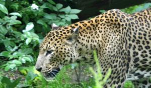 Seniorentagesreise zum Osnabrücker Zoo am 22. April