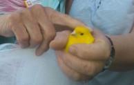 Haus Mutter Anna: Zugeflogener Kanarienvogel