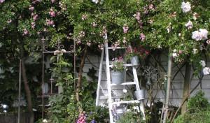 15 Gärten öffnen wieder ihre Pforten
