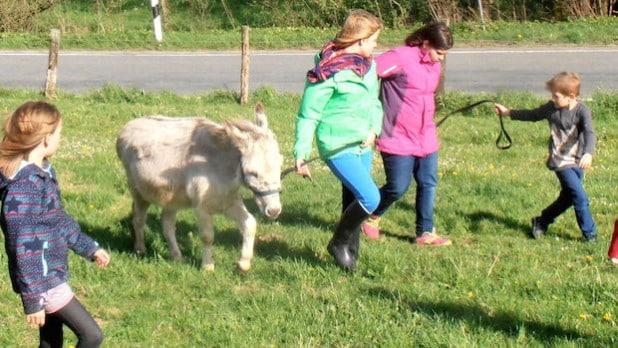 Esel Kaspar wird abends in den Stall zurückgeführt (Foto: Martina Schöttler)