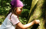 Waldkonzert und die Erlebnisse der Waldfee: Lauschen, Zuhören, Entdecken