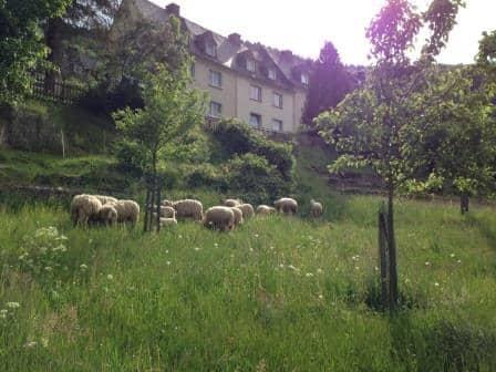 Blick auf die Herde (Foto: ABG)