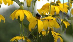 Vorsicht vor Wespen, Bienen & Co.