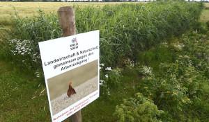 Artenschutz in der Feldflur