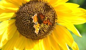 Sommer, Sonne, Grillen: Leider kann es auch Probleme geben