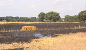 Weizenfeld brennt ab